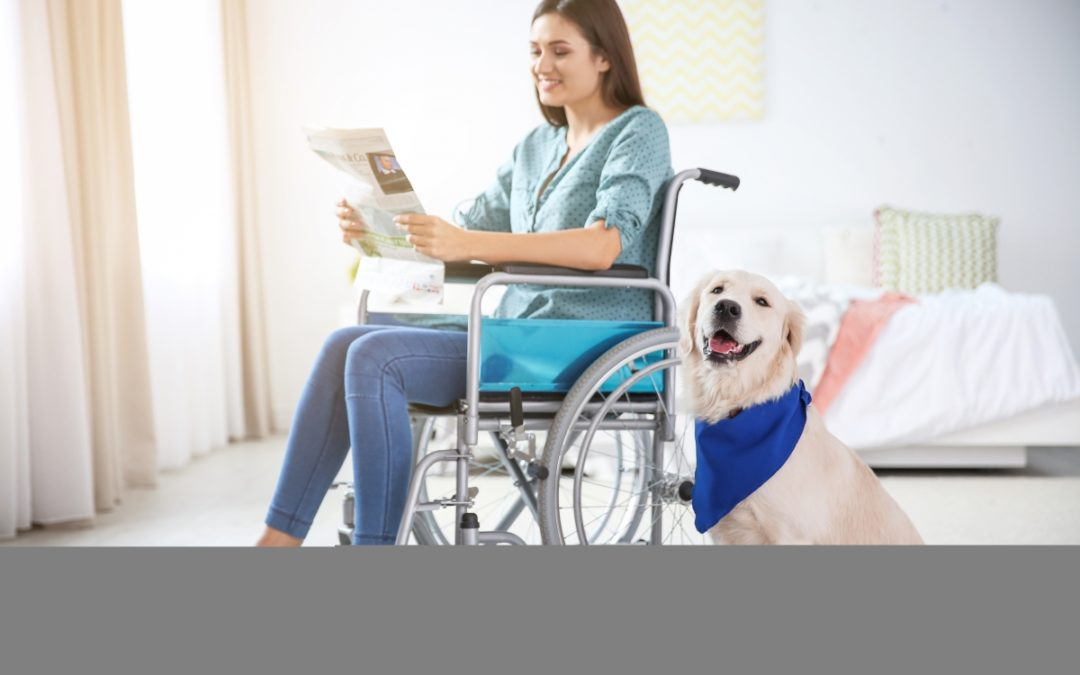 Animal-Assisted Therapy and TBI Recovery